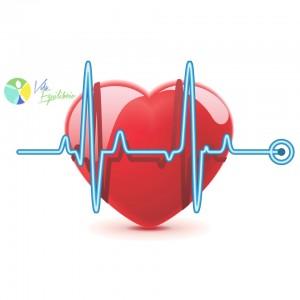 colesterol-vida-equilibrio